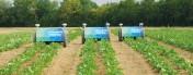 Chwasty mogą być istotnym problemem dla rolników. Czy istnieje alternatywa dla oprysków na szeroką